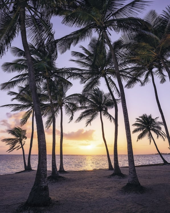 Fototapete Palmtrees on Beach