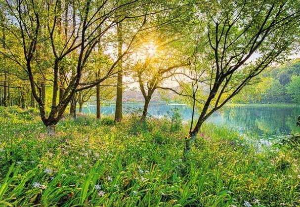 Fototapete Spring Lake