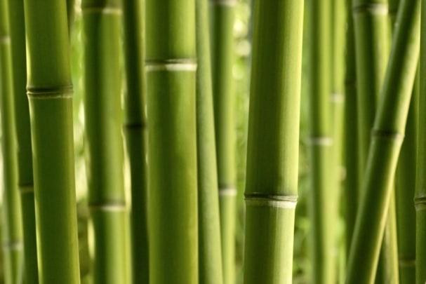 Tapete Bamboo