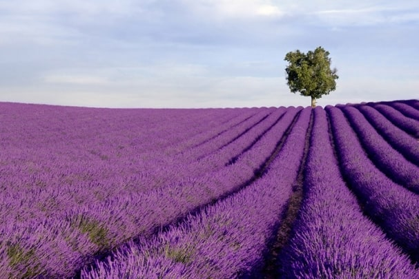 Tapete La Provence 01