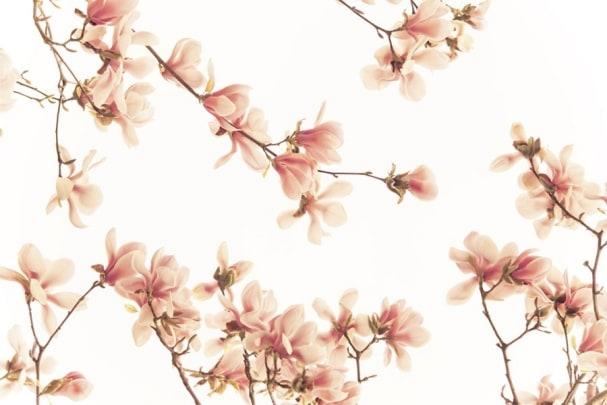 Tapete Magnolia 02