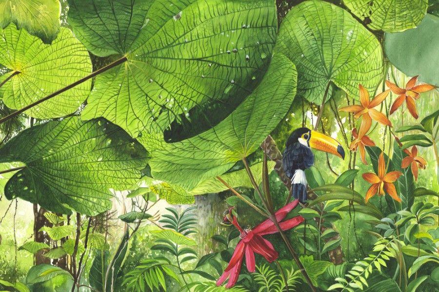 Abwaschbare Tapete F?r Kinderzimmer : Pin Fototapete Tapete Natur Dschungel Wildniss Pflanzen Foto 360 Cm X