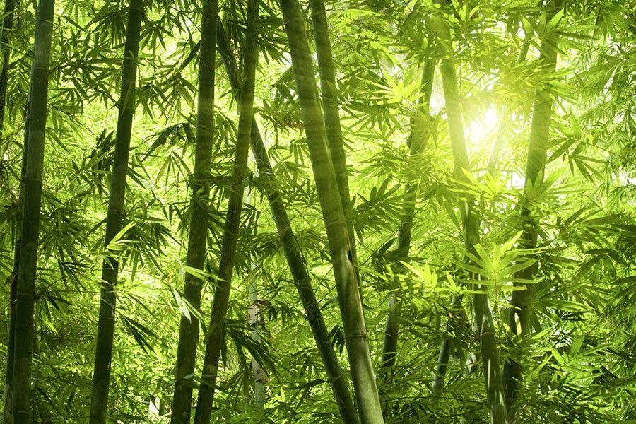 Tapete Bamboo Wald 02