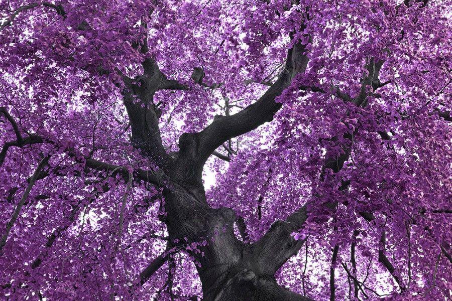 Tapete purple tree for Tapeten in lila