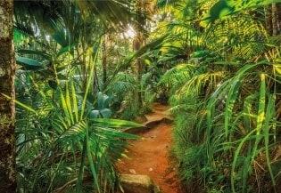 Fototapete Jungle Trail