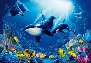 Fototapete Sealife