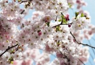 Fototapete Spring