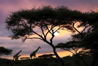 Tapete Africa Sunset 01