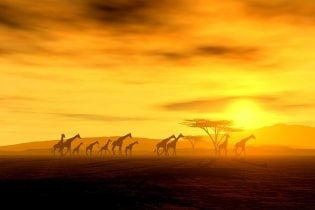 Tapete Africa Sunset 02