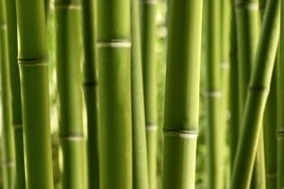 Tapete Bamboo