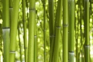 Tapete Bamboo Wald 03