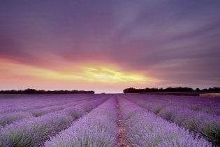 Tapete La Provence 02