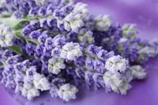 Tapete Lavender 02
