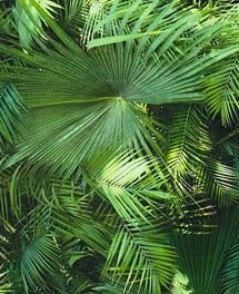 Tapete Tropic