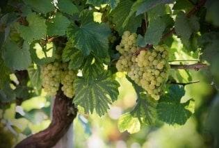 Tapete Wine Art